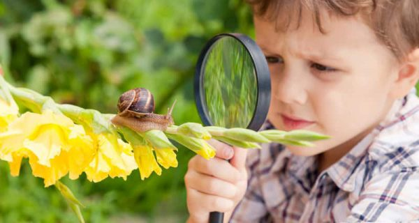happy-little-boy-playing-in-the-park-with-snail-P35W269.jpg